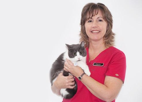 Vétérinaire Drummondville: Technicienne santé chats
