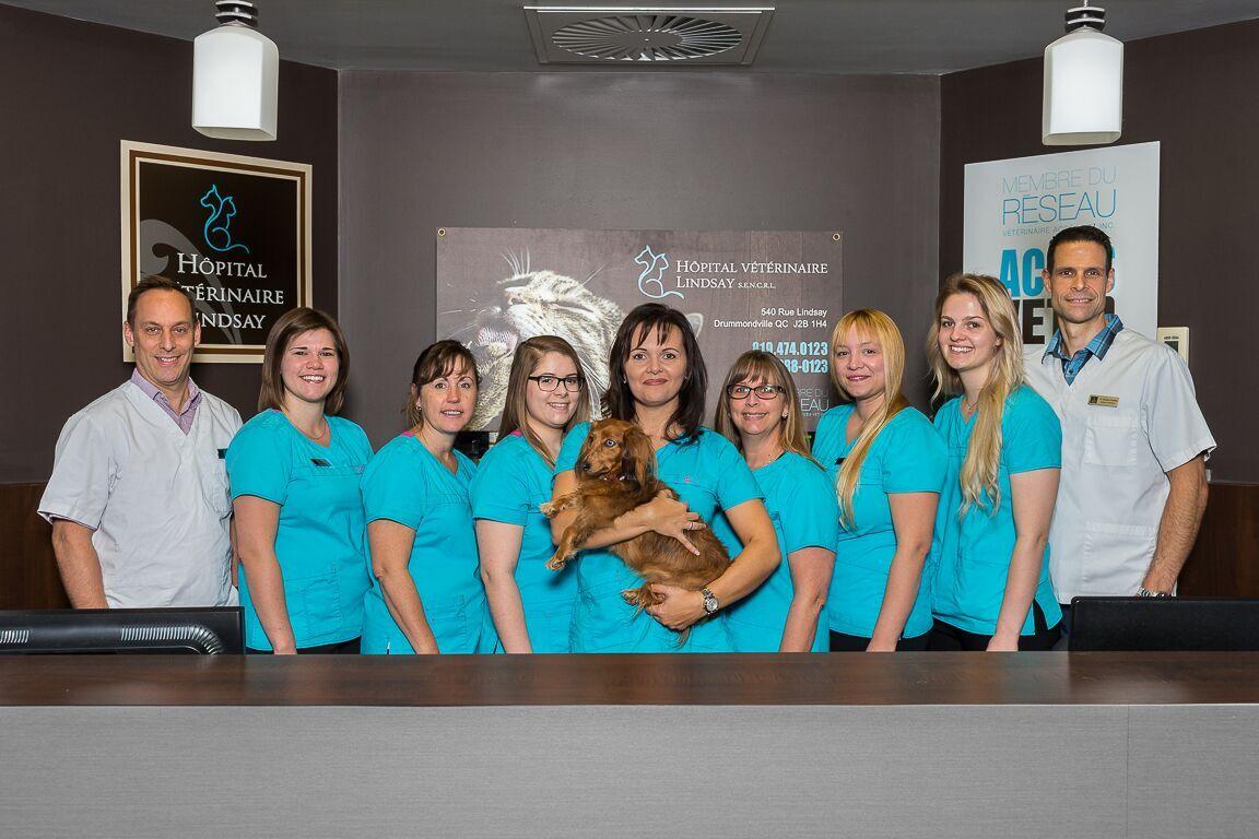 Vétérinaire Drummondville: soins chat – Mascotte