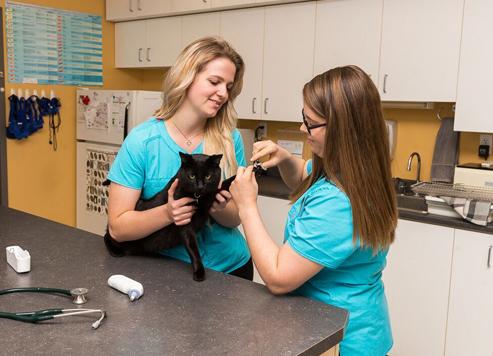 Vétérinaire chat Drummondville salle de traitement