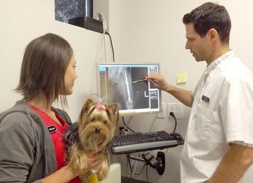 Chirurgie chien urgence radio chat drummondville