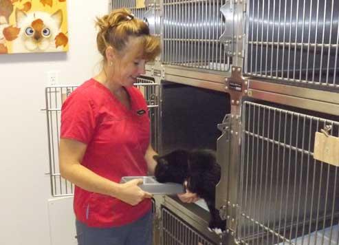 Vétérinaire chat Drummondville